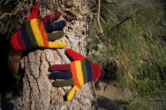 Mains d'automne sur un joncteur réseau d'arbre Photographie stock