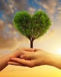 Mains d'enfant et de mâle tenant un arbre sous forme de coeur Photographie stock libre de droits
