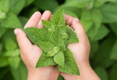 Mains d'enfant tenant la jeune plante Photos libres de droits