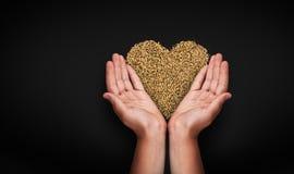 Mains d'enfants avec du blé Images libres de droits