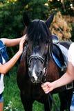 Mains d'homme et de femme frottant le cheval Photos libres de droits