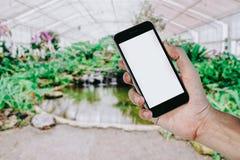 Mains d'homme tenant le téléphone intelligent Photo libre de droits