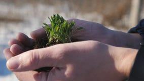 Mains d'homme tenant une petite pousse verte Un homme tient une pousse de germination avec la terre noire dans des ses mains clos banque de vidéos