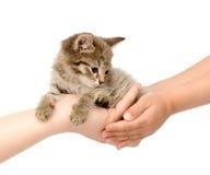 Mains d'un chaton adulte de transfert dans les mains de l'enfant OIN Images stock