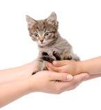 Mains d'un chaton adulte de transfert dans les mains de l'enfant OIN Image stock