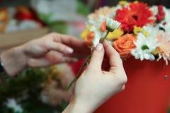 Mains d'un fleuriste tenant une fleur de marguerite photographie stock libre de droits