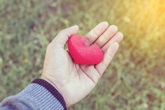 Mains d'un homme tenant un cerf rouge comme symbole de l'amour valentine d Images libres de droits