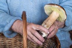 Mains d'une femme agée tenant un champignon blanc images libres de droits