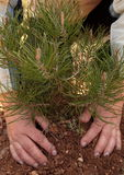 Mains d'une femme plantant un arbre Photographie stock