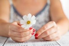 Mains d'une femme tenant la fleur Photo libre de droits