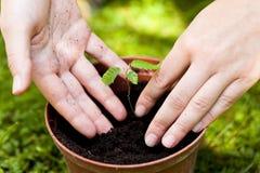 Mains dans le sol, plantant un arbre, bakground de jardinage Image libre de droits
