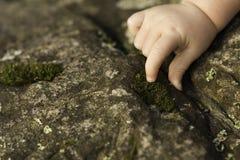 Mains de bébé explorant la mousse sur la roche Image libre de droits