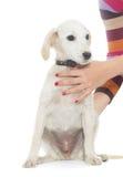 Mains de chien et d'humain Photo stock