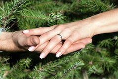 Mains de femelle et d'homme contre des branchements de fourrure-arbre Image libre de droits
