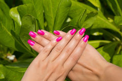 Mains de femme avec le plan rapproché rose manicured de clous Voiture de peau et de clou Images stock
