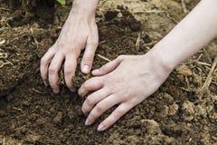 Mains de femme creusant la terre Photos stock