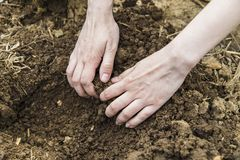 Mains de femme creusant la terre Photo stock