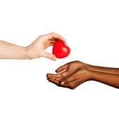 Mains de femme et d'homme avec le coeur rouge Image libre de droits