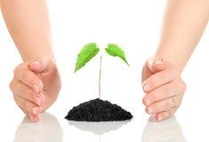Mains de femme protégeant la petite plante verte Photographie stock libre de droits