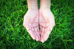 Mains de femme sur l'herbe verte image libre de droits