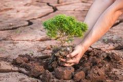 Mains de femme tenant l'élevage d'arbre Image libre de droits