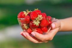 Mains de femme tenant les fraises mûres au-dessus du vert photos stock