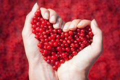 Mains de femme, tenant les groseilles rouges sous forme de coeur Image stock