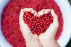 Mains de femme, tenant les groseilles rouges sous forme de coeur Images stock