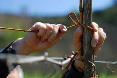 Mains de fermier Images libres de droits