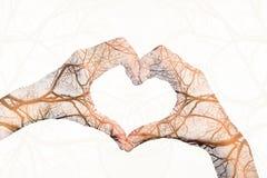 Mains de fille dans la forme du coeur d'amour d'isolement sur le fond blanc Photo libre de droits