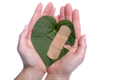 Mains de filles de sparadrap cassées par feuille en forme de coeur Photo stock