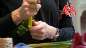 Mains de fleuriste de femme faisant une composition florale ou un bouquet des fleurs fra?ches banque de vidéos