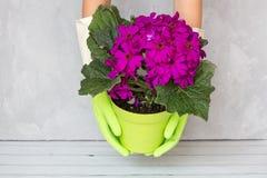 Mains de jardinier tenant le pot de fleur Faisant du jardinage, plantant et concept de personnes image stock