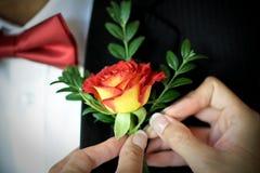 Mains de jeune mariée goupillant le boutinnierre sur la veste de pères Photos stock