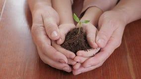 Mains de la femme agée et du bébé tenant une jeune plante verte sur la table en bois Concept d'écologie clips vidéos