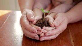 Mains de la femme agée et du bébé tenant une jeune plante verte sur la table en bois Concept d'écologie banque de vidéos