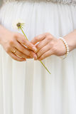 Mains de la jeune mariée avec le pissenlit Photos libres de droits