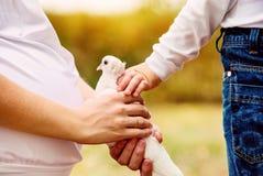 Mains de mère et de fils avec la colombe blanche Image stock