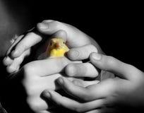 Mains des enfants Image libre de droits