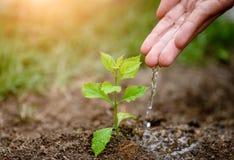 Mains donnant l'eau à un jeune arbre pour la plantation photo libre de droits
