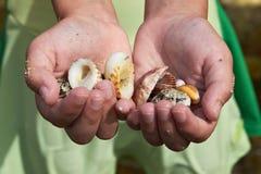 Mains du `s d'enfant avec des Seashells image libre de droits