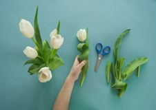 Mains du ` s d'enfants avec un bouquet de vue supérieure de tulipes Fond pour une carte d'invitation ou une félicitation La fille Images stock
