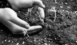 Mains et agriculture du ` s de femmes images libres de droits