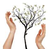 Mains et arbre d'argent Images libres de droits