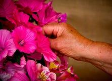 Mains et fleurs Images stock