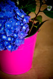 Mains et fleurs Image libre de droits