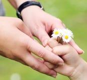 Mains et fleurs de camomille Image libre de droits