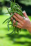 Mains et haricots verts Image libre de droits
