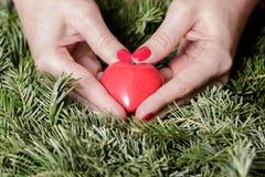 Mains femelles avec le coeur sur des branches de sapin Jour de Valentine Photo libre de droits