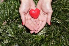 Mains femelles avec le coeur sur des branches de sapin Jour de Valentine Image libre de droits